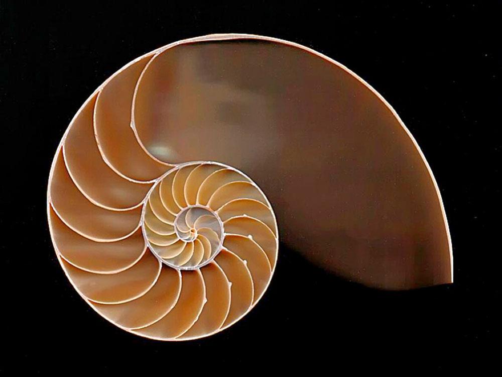 Thomas Mercer Nautilus